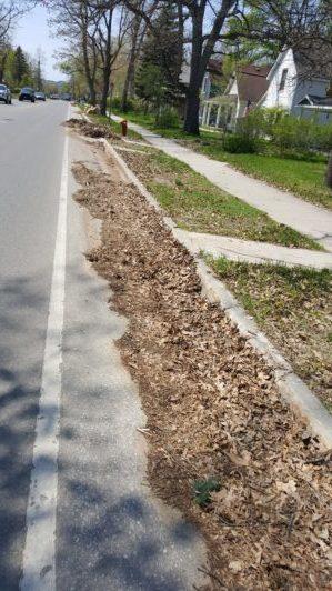 Leaves in Bike Lane